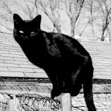 cat-bw