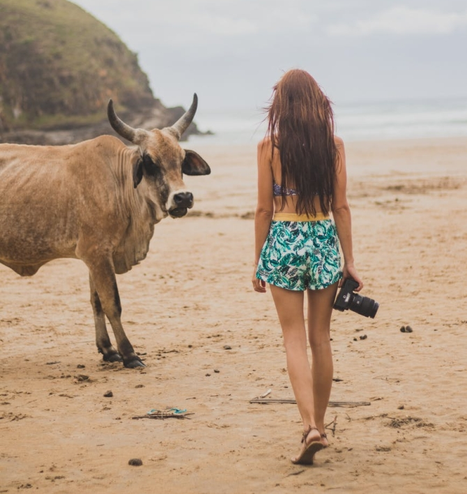 woman holding a camera near a cow